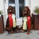 Dog Show Project Fehraltdorf 19./20.September 2020